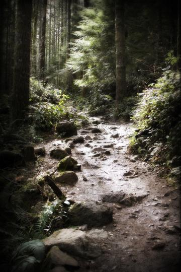 Rattlesnake Mountain Trail near Seattle - 2 of 3