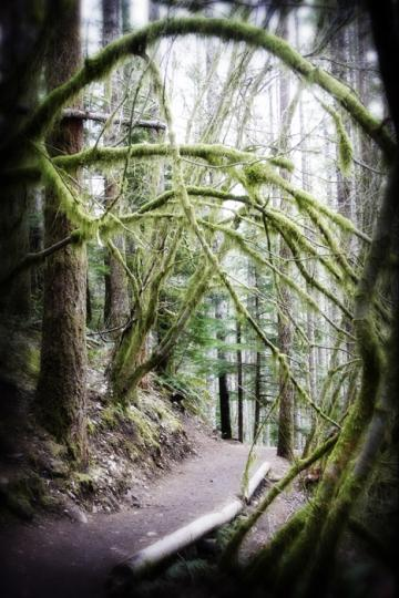 Rattlesnake Mountain Trail near Seattle - 3 of 3